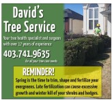 David's Tree Service is your tree health specialist