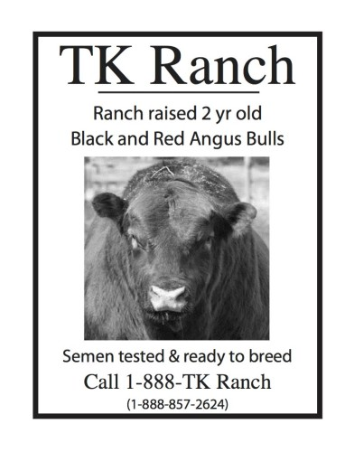 Ranch raised 2 yr old Black and Red Angus Bulls