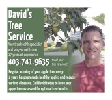 Your tree health specialist and surgeon with over 17 years of experience