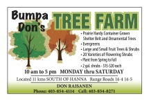 Selection of Trees at Bumpa Don's TREE FARM